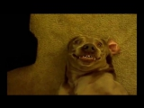 собаки пукают - забавные морды