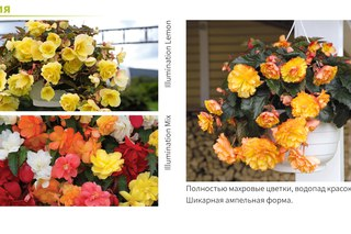 Цветы людмила вологда