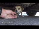 How a little microchip changed this dog's life Please share this important video