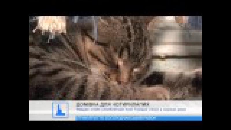 На Прикарпатті жінка прихистила у своєму помешканні більше 70 котів та 20 собак