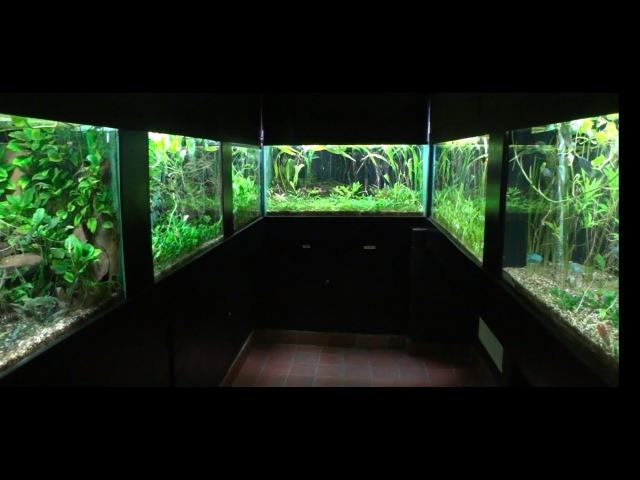 Aquascape Ideas Biotops