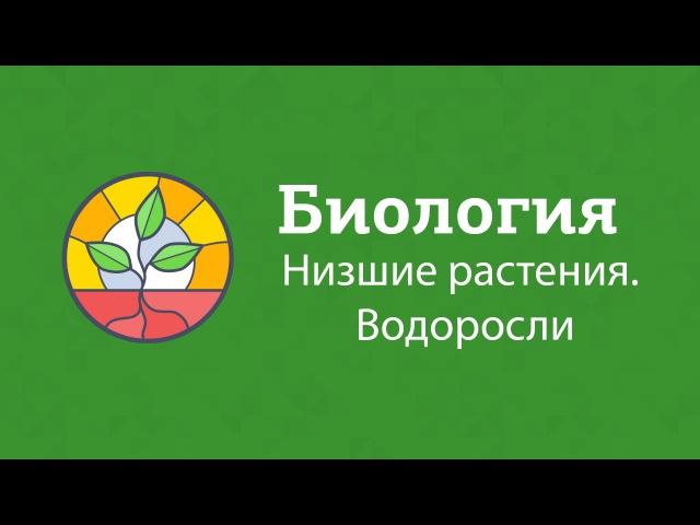 Биология  Подготовка к ЕГЭ 2017   Низшие растения Водоросли