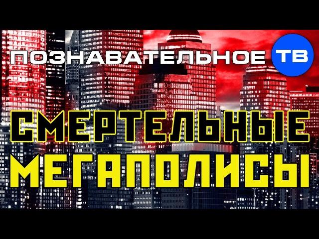 Смертельные мегаполисы (Познавательное ТВ, Михаил Величко)