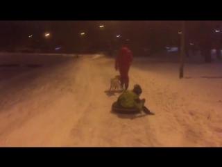 ездовые лабрадор и Бигль дек 2017