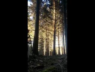 Быстрая вырубка леса с эффектом домино