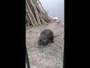 Серпухов Водяная крыса
