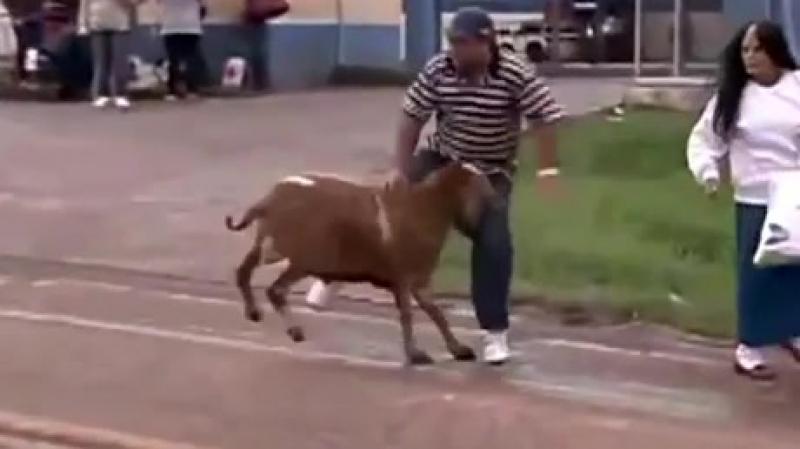 Злой коз против города