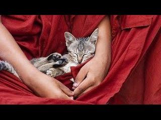 3 часа полного релакса под пение монахов и тибетских чаш