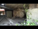 БРОШЕННЫЕ животные ДО и ПОСЛЕ спасения (ВИДЕО) (3)