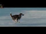 Белый плен  Eight Below (2006) MUSIC VIDEO 1080 HD