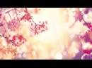 Relaxing Sleep Music Soft Piano Music Sleeping Music Soothing Meditation Music Yoga Music ★98
