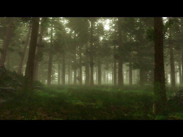 Forest Sounds | Woodland Ambience, Bird Song, Nearby Village | 3 Hours