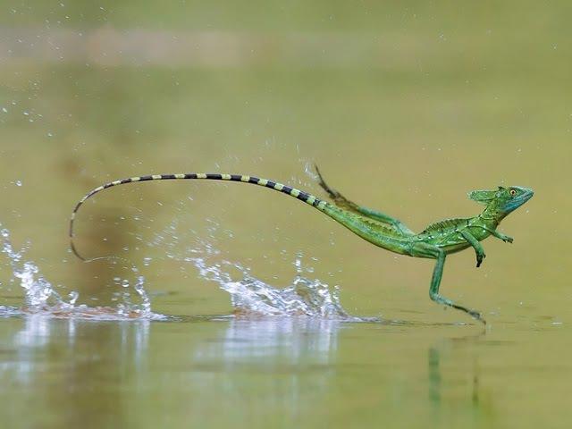Искусство движения. Способы передвижения, позаимствованные у природы. Биомимикрия 06.04.2017