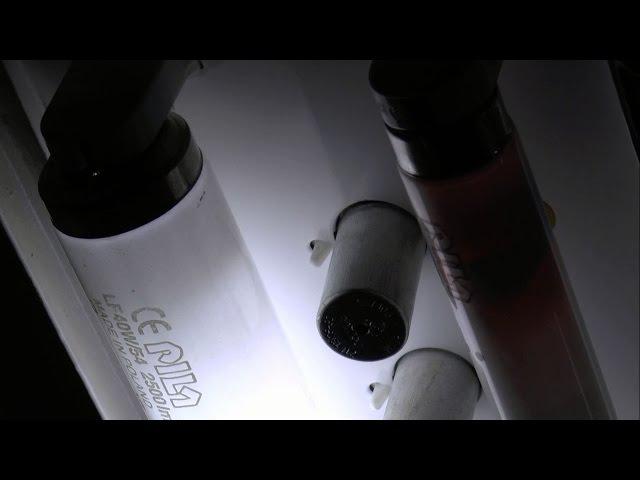 EOL-fluorescent tube burnout T8 36W