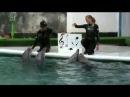 Крым выступление дельфинов в Ялтинском дельфинарии.