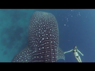 GoPro Awards׃ Ocean Ramsey and a Whale Shark