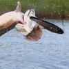 Рыболовные товары с Aliexpress