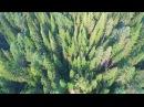 Тайга кормилица - д. Анциферово на Енисее, Сибирь