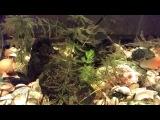 Чистый аквариум с черным кремнем