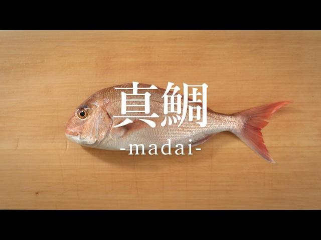 真鯛(まだい)のさばき方 - How to filet Red Sea Bream -|日本さばけるプロジェクト