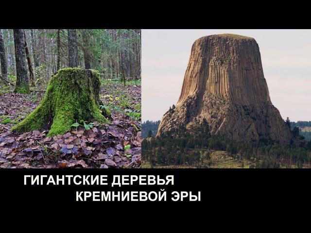 ОКАМЕНЕВШАЯ ПАМЯТЬ. Деревья кремниевой эры. Леонид Корнилов.