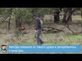 Мужчина подрался с кенгуру, чтобы спасти своего пса