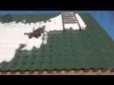 Коты и снег (6 sec)