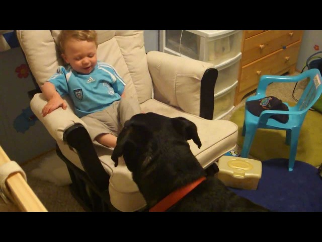 Rottweiler causing a baby laugh attack 3