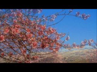 MUSIC BY SRI CHINMOY . FRAGILE PURITY ........ MEDITATION