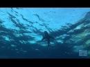 дельфины, люди и акулы.mp4