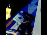luda_malibu video