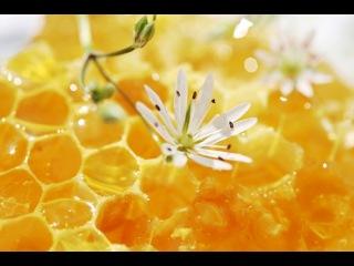 DJ ArtHouse - Nectar