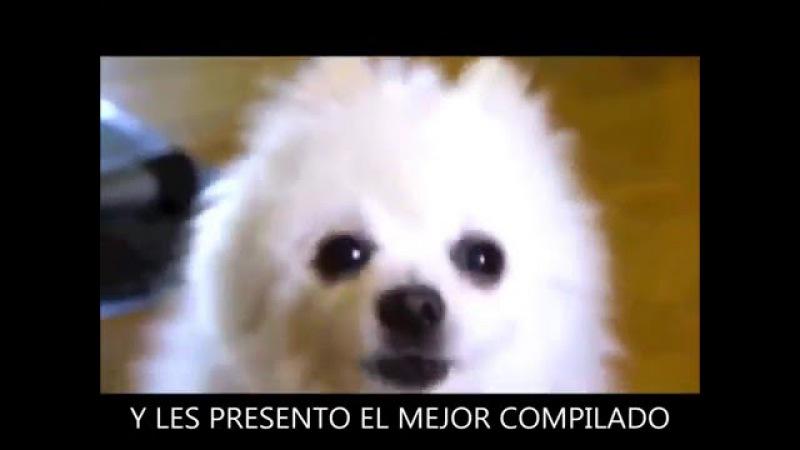 LA MAGIA DE LA EDICIÓN 6 - ESPECIAL - GABE THE DOG - 1000 SUS