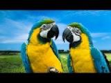 Попугаи - свободные полеты на природе! Домашние питомцы!