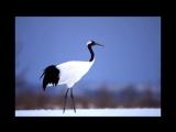 Журавлики Hiromi Sano Snow Countrymuzbaron com Фотоархив монтаж Екатерина Демидова