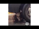 Топ 10 самых смешных котов