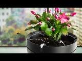 Обзор умного горшка Parrot Pot – отличный подарок на 8 марта