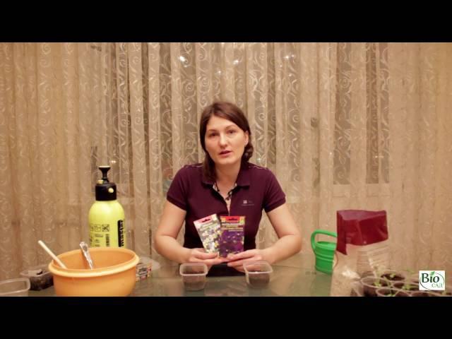 Выращивание виолы (садовой фиалки). Часть 1 - Посадка