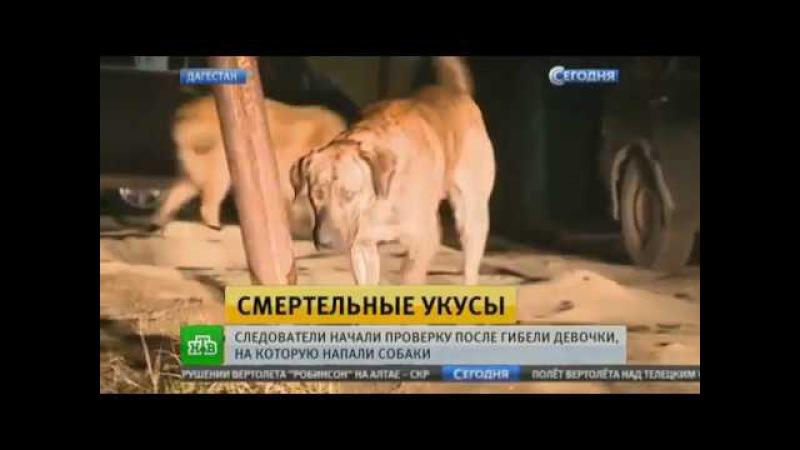 Бродячие махачкалинские псы загрызли школьницу в100метрах от ее дома