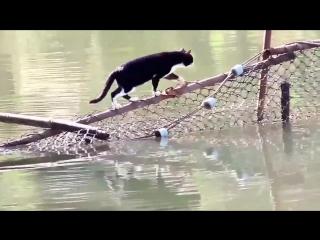 Этот кот плюёт на трудности