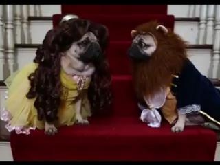 красавица и чудовище 2017 смотреть онлайн бесплатно в хорошем качестве