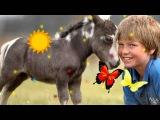 Я люблю свою лошадку на стихи А Барто Абросимова Л И