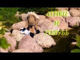 Агнец и Голубь - мультфильм - Христианская детская песня - клип