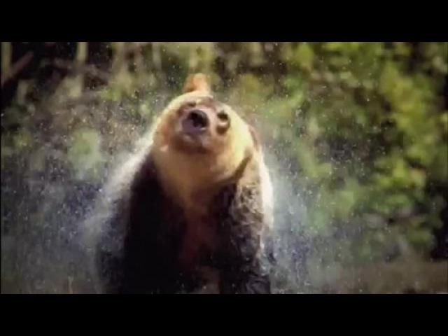 «Discovery: Северная Америка» (2013): ТВ-ролик / www.kinopoisk.ru/film/774107/