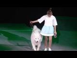 МАРИЯ ПАНЮКОВА Маша с собакой -дрессировщица