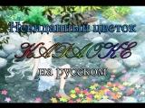 Невиданный цветок караоке на русском под плюс