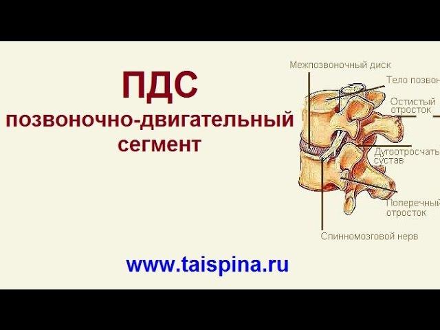 ПДС позвоночно двигательный сегмент из Online курса ТайШань Здоровый позвоноч