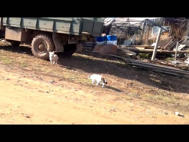 When Cats Attack / Страшнее кошки зверя нет!