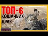 САМЫЕ СМЕШНЫЕ КОШАЧЬИ БОИ. Коты воители-ТОП 6