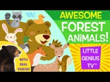 Forest Animals! videos for babies, toddlers, kids Little Genius TV